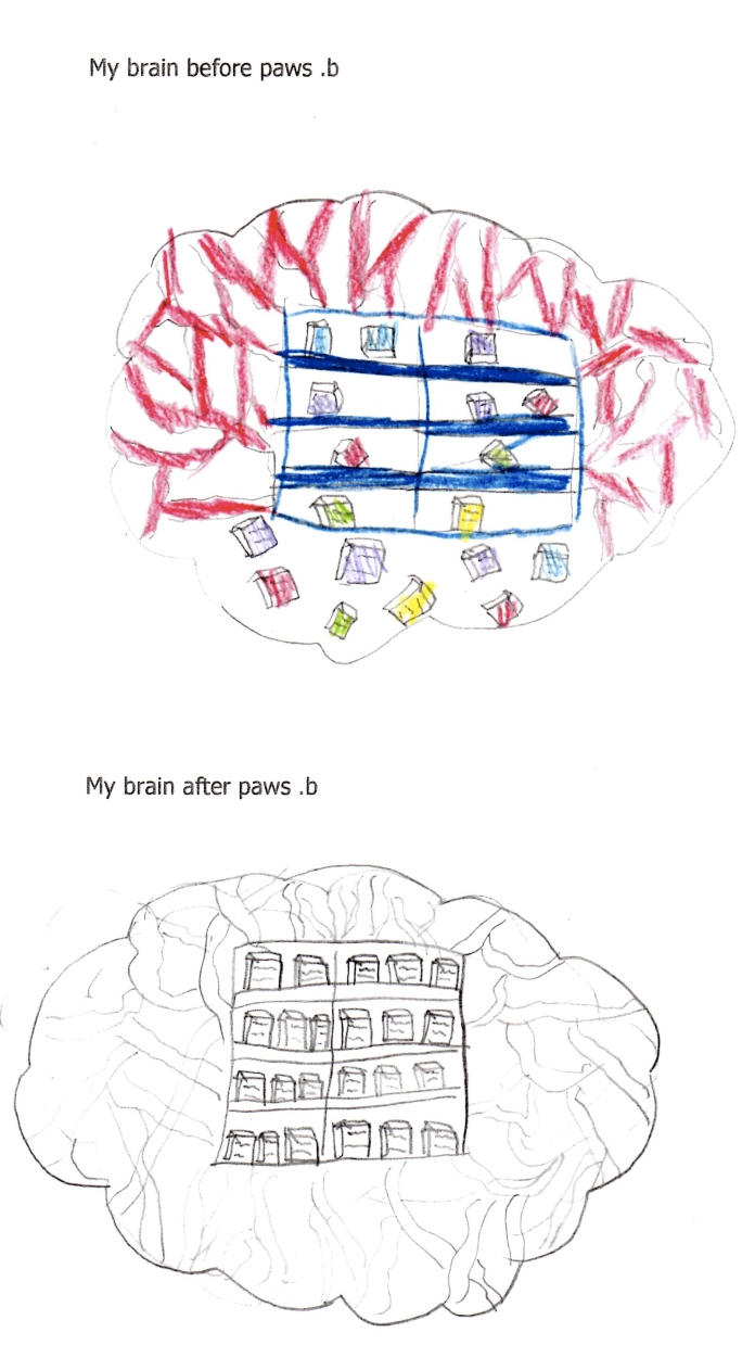 My brain before and after paws.b